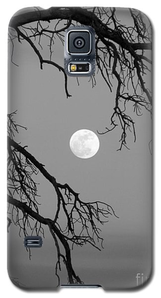 Full Moon Old Snag Galaxy S5 Case