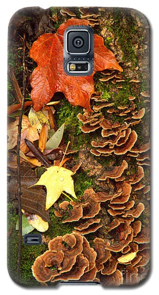 Galaxy S5 Case featuring the photograph Fungi by Jim McCain