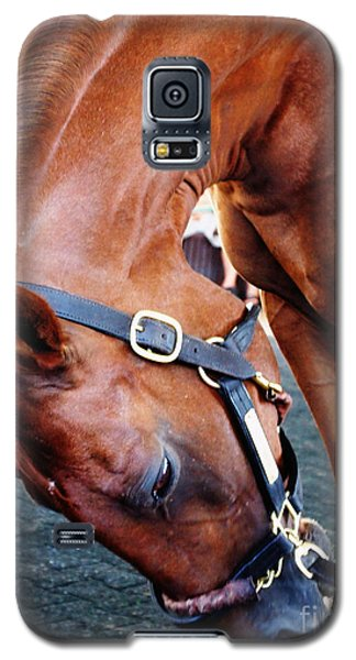 Funny Cide A Champion Galaxy S5 Case by Deborah Fay