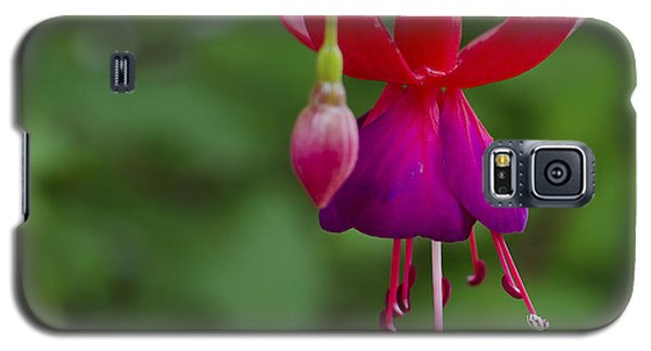Fuschia Flower Galaxy S5 Case