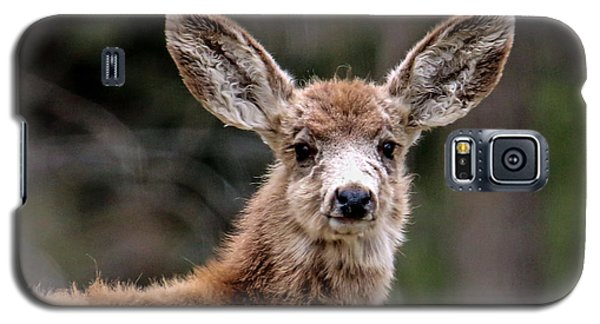 Fuzzy Fawn Galaxy S5 Case