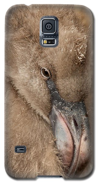 Galaxy S5 Case featuring the photograph Fuzzy Flamingo Baby by Bob and Jan Shriner