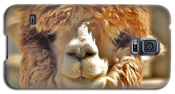 Fuzzy Wuzzy Alpaca Galaxy S5 Case