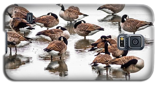 Galaxy S5 Case featuring the photograph Gaggle Of Geese by Brian Stevens