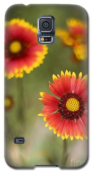 Gaillardia 'arizona Sun' Galaxy S5 Case