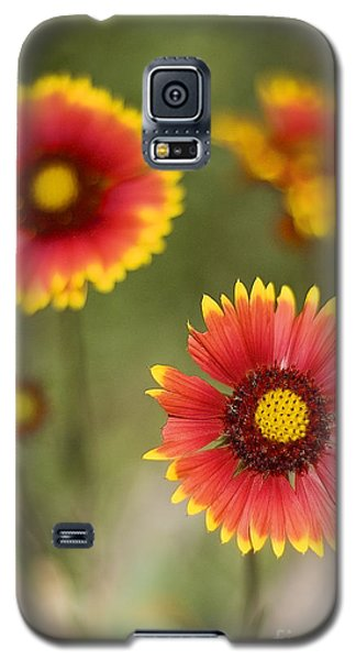 Gaillardia 'arizona Sun' Galaxy S5 Case
