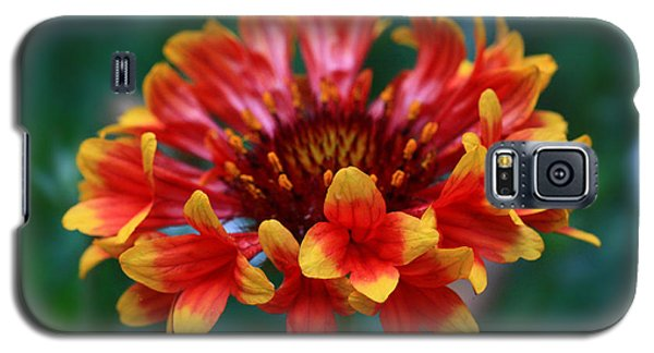Galaxy S5 Case featuring the photograph Gaillardia Flower by Keith Hawley