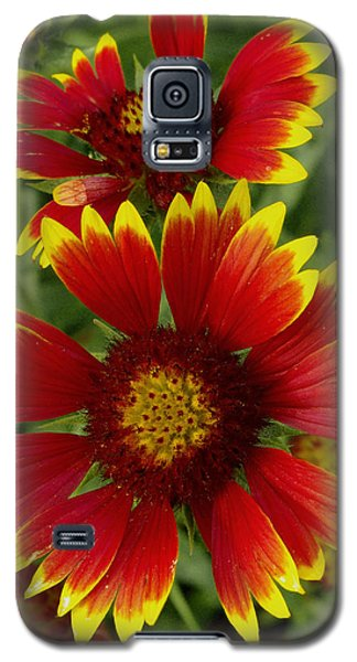Galaxy S5 Case featuring the photograph Gaillardia / Flowers by James C Thomas