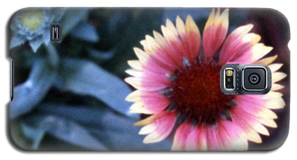 Gaillardia Galaxy S5 Case