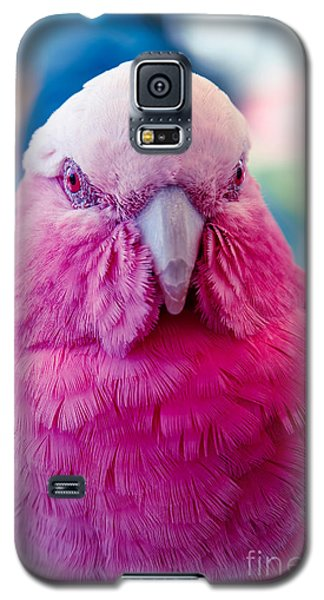 Galah - Eolophus Roseicapilla - Pink And Grey - Roseate Cockatoo Maui Hawaii Galaxy S5 Case by Sharon Mau