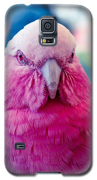 Galah - Eolophus Roseicapilla - Pink And Grey - Roseate Cockatoo Maui Hawaii Galaxy S5 Case