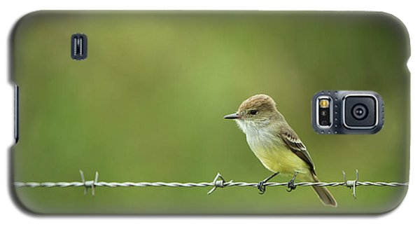 Galapagos Flycatcher (myiarchus Galaxy S5 Case
