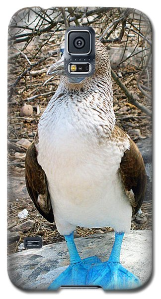Galapagos Island Blue Footed Booby Bird 1 Galaxy S5 Case