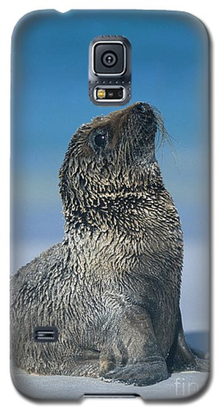 Galaxy S5 Case featuring the photograph Galapagos Sea Lion by Chris Scroggins