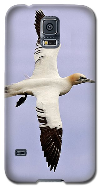 Galaxy S5 Case featuring the photograph Gannet . by Paul Scoullar