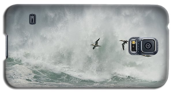 Gannets Past A Raging Sea. Galaxy S5 Case