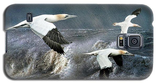 Galaxy S5 Case featuring the photograph Gannets Skimming The Waves by Brian Tarr