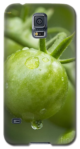 Garden Fresh Galaxy S5 Case by Carrie Cranwill
