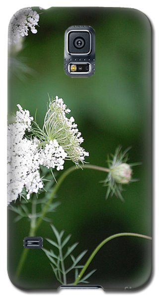 Garden Lace Group By Jammer Galaxy S5 Case