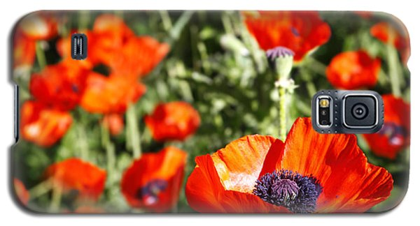Galaxy S5 Case featuring the photograph Garden Of Poppies by Lincoln Rogers