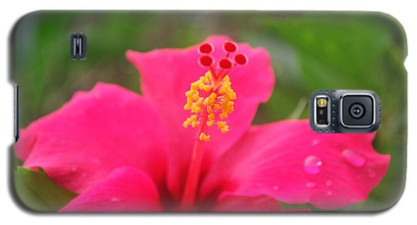 Galaxy S5 Case featuring the photograph Garden Rains by Miguel Winterpacht