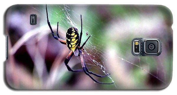 Garden Spider Galaxy S5 Case by Deena Stoddard