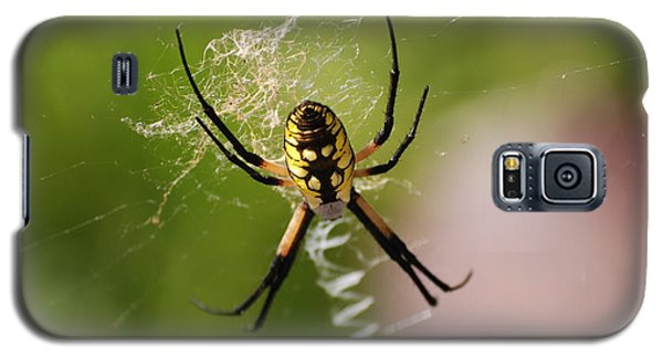 Galaxy S5 Case featuring the photograph Garden Spider by Mark McReynolds