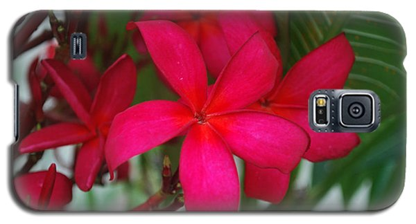 Galaxy S5 Case featuring the photograph Garden Treasures by Miguel Winterpacht