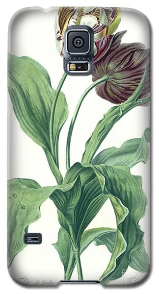 Garden Galaxy S5 Case - Garden Tulip by Gerard van Spaendonck