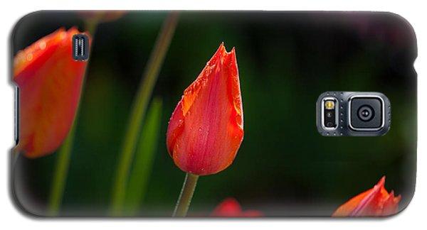Garden Tulips Galaxy S5 Case