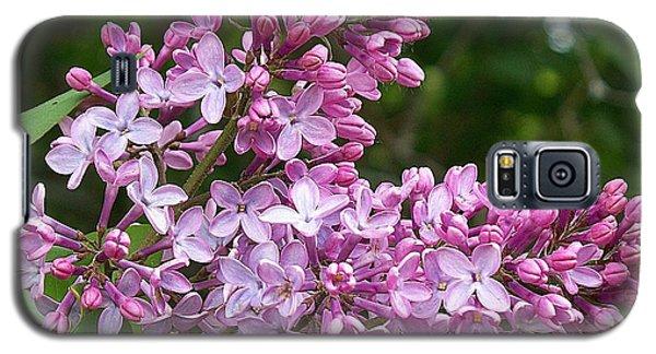 Gathering Lilacs Galaxy S5 Case by Joy Nichols