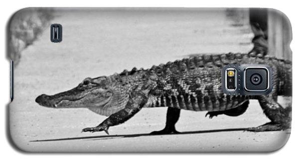 Gator Walking Galaxy S5 Case