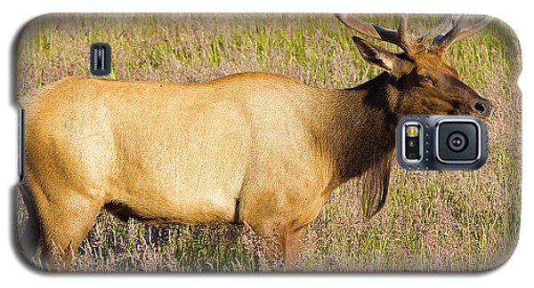 Galaxy S5 Case featuring the photograph Gazing Elk by Todd Kreuter