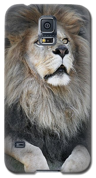 Gazing Galaxy S5 Case