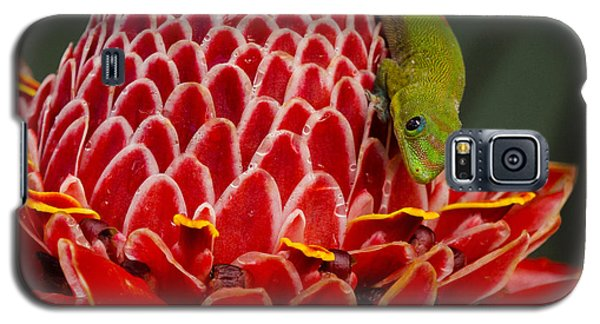 Galaxy S5 Case featuring the photograph Gecko On Red Ginger by Inge Riis McDonald