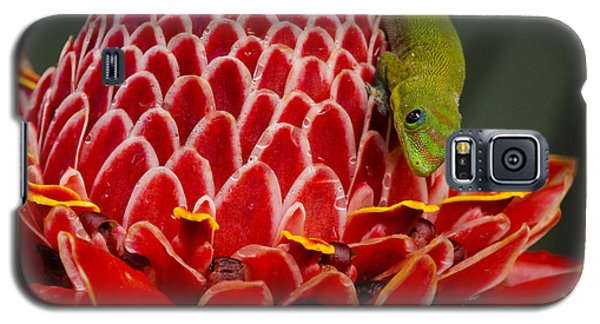 Gecko On Red Ginger Galaxy S5 Case by Inge Riis McDonald