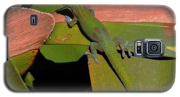 Gecko Galaxy S5 Case by Pamela Walton