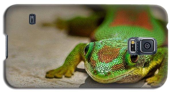 Gecko Portrait Galaxy S5 Case