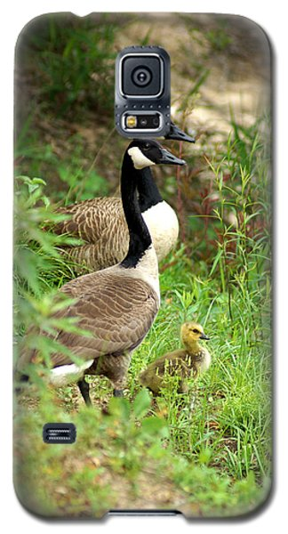 Geese And Gosling Galaxy S5 Case by Kim Pate