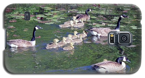 Geese And Goslings Galaxy S5 Case