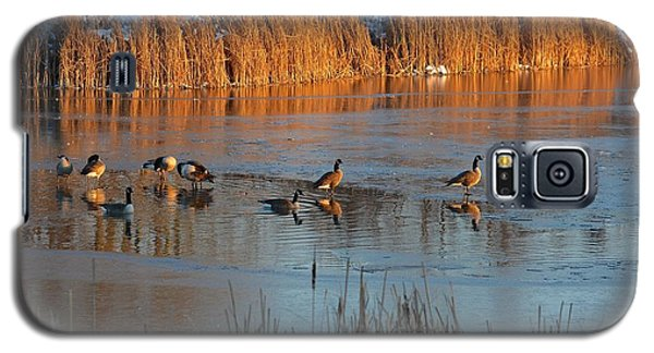 Geese In Wetlands Galaxy S5 Case
