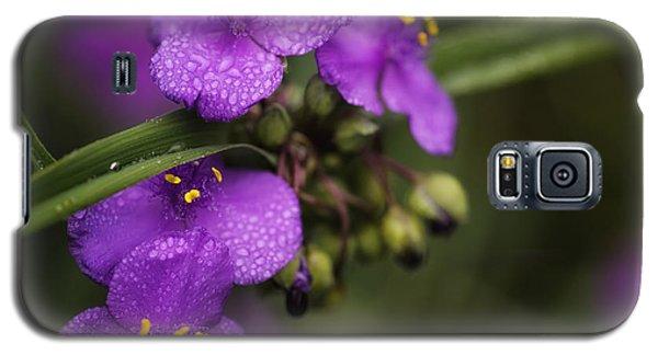 Gentle Rain Galaxy S5 Case