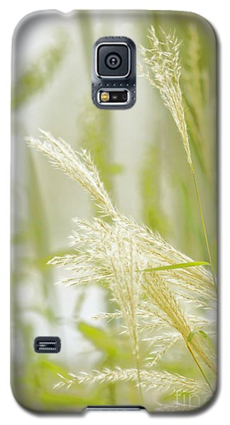 Gentle Touch Of Summer Galaxy S5 Case