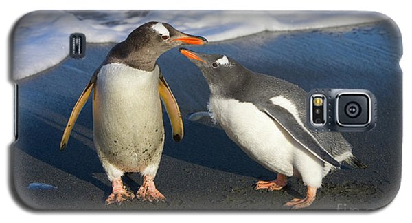 Gentoo Penguin Chick Begging For Food Galaxy S5 Case