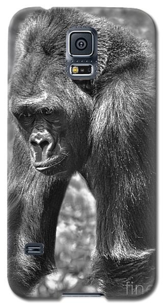Galaxy S5 Case featuring the photograph George Of The Jungle by Adam Olsen