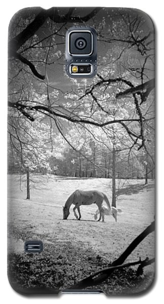 Galaxy S5 Case featuring the photograph Georgia Horses by Bradley R Youngberg