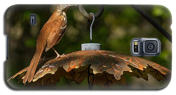 Georgia State Bird - Brown Thrasher Galaxy S5 Case