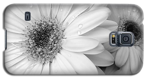 Gerber Daisies In Black And White Galaxy S5 Case by Jennie Marie Schell