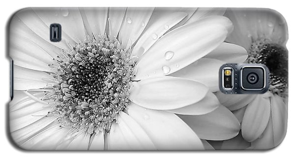 Gerber Daisies In Black And White Galaxy S5 Case