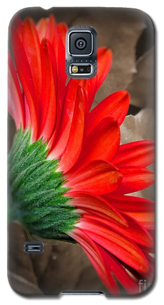 Gerber Daisy Bashful Red Galaxy S5 Case